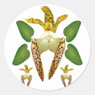 Bulboaphyllum Lasiochilum Classic Round Sticker