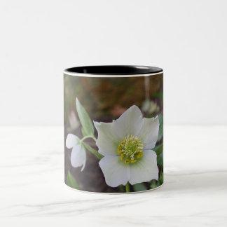 Bulbos de la primavera en flor en la taza de