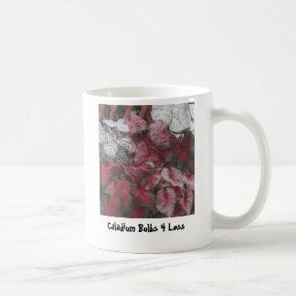 Bulbos mezclados, bulbos 4 del Caladium menos Taza De Café