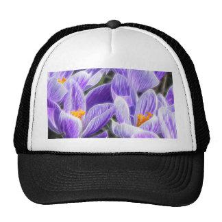 Bulbos perennes - azafranes de la primavera gorras de camionero