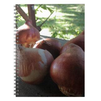 Bulbos sanos gordos del tulipán note book