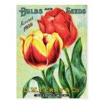 Bulbos y semillas rojos y tulipán amarillo postales