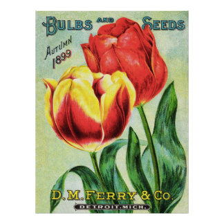Bulbs and Seeds Red and Yellow Tulip Poster