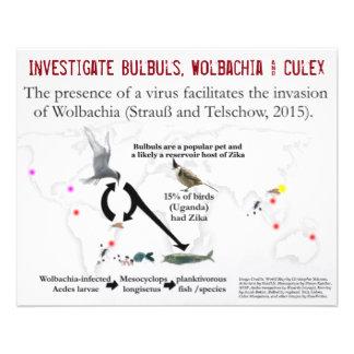 Bulbuls, Wolbachia & Culex (2-Sided) by RoseWrites Flyer
