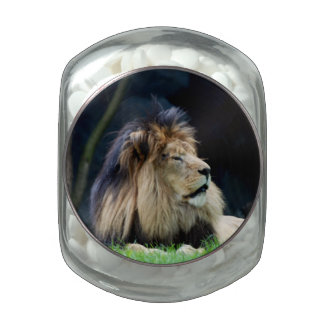 Bulgaria Lion Jelly Belly Candy Jar