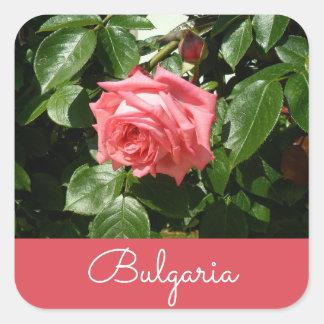 Bulgarian Rose Square Sticker