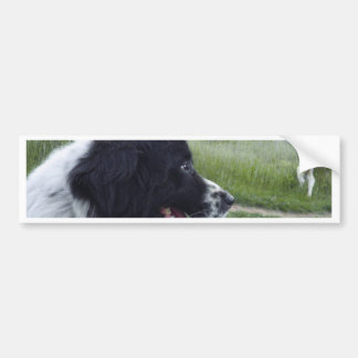 Bulgarian Sheepdog Car Bumper Sticker