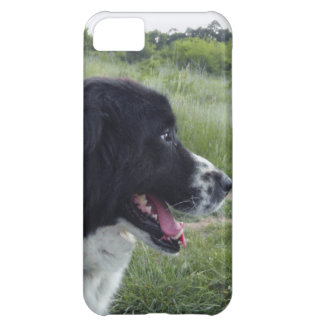 Bulgarian Sheepdog Cover For iPhone 5C