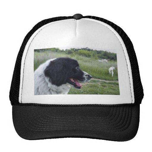 Bulgarian Sheepdog Trucker Hat