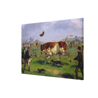 Bull Baiting (oil on paper laid on panel) Canvas Print