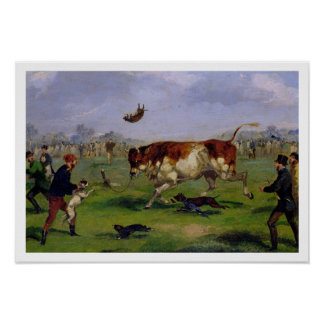 Bull Baiting (oil on paper laid on panel) Poster