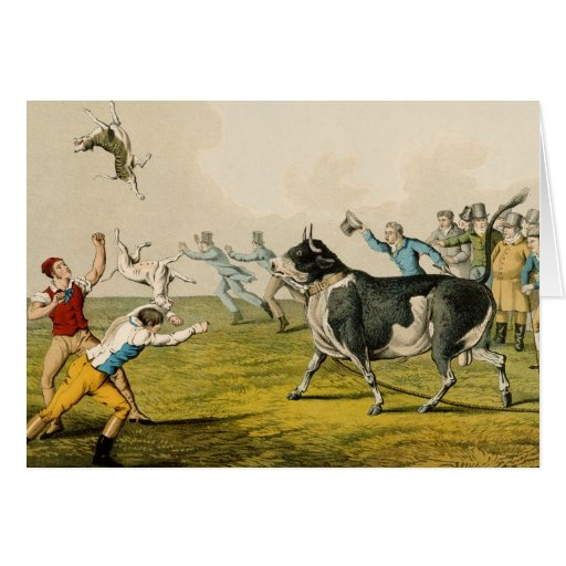'Bull Baiting', pub. by Thomas McLean, 1820, (prin Greeting Cards