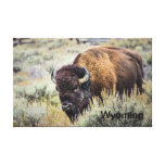 Bull Bison Canvas Canvas Print