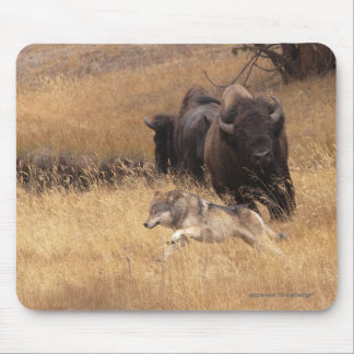 Bull Bison, Female, & Wolf Mouse Pads