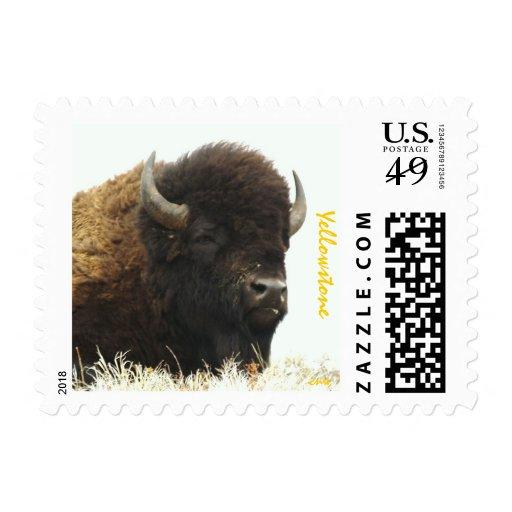 Bull Bison Portrait Stamp