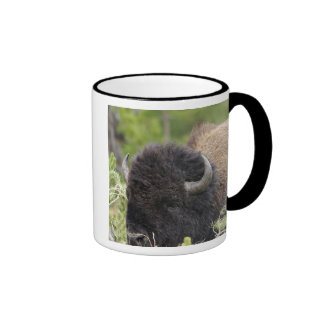 Bull Bison Resting in Forest Yellowstone Mugs