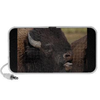 bull bison singing notebook speakers