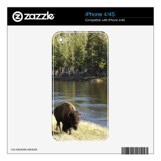 Bull Bison Walking Along River, Yellowstone iPhone 4 Skins