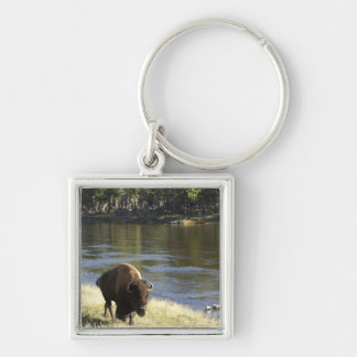 Bull Bison Walking Along River, Yellowstone Keychain