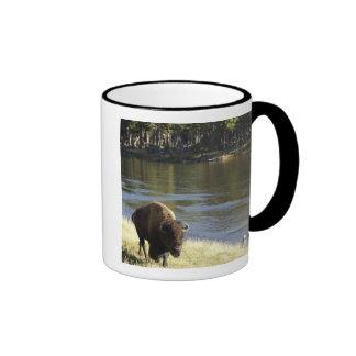 Bull Bison Walking Along River Yellowstone Coffee Mugs