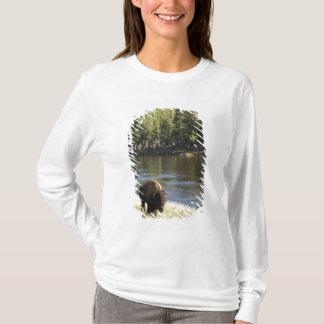 Bull Bison Walking Along River, Yellowstone T-Shirt