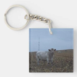Bull blanca en un campo de maíz nuevamente llavero cuadrado acrílico a doble cara