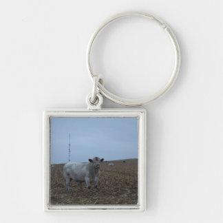 Bull blanca en un campo de maíz nuevamente llavero cuadrado plateado
