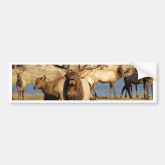 bull bugle bumper sticker