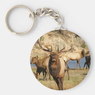 bull bugle keychain