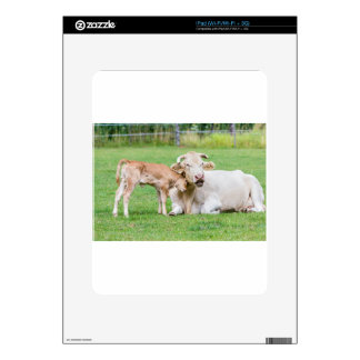 Bull calf loves mother cow in meadow decals for iPad