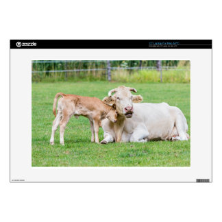 Bull calf loves mother cow in meadow skins for laptops