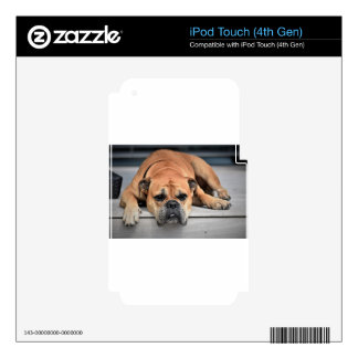 Bull Dog iPod Touch 4G Decals