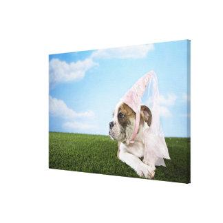 Bull Dog puppy princess Canvas Print