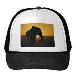 Bull elephant hats