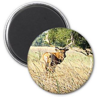 Bull Elk 2 Inch Round Magnet