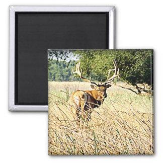 Bull Elk 2 Inch Square Magnet