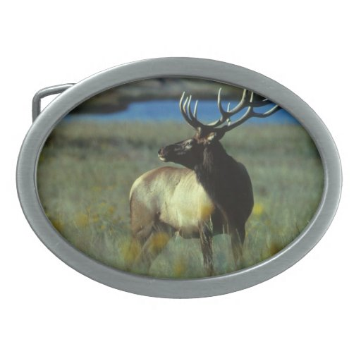 Bull Elk - American Mammal Collection Oval Belt Buckles