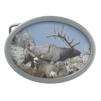 Bull elk and buck deer oval belt buckle