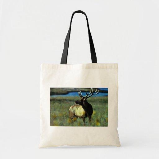 Bull elk bags