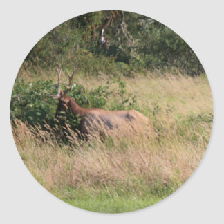 Bull Elk & Blackberries Classic Round Sticker