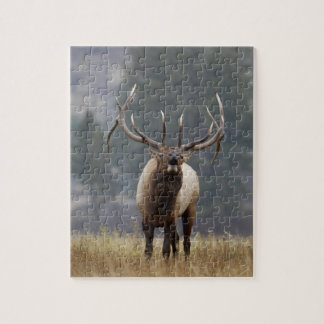 Bull Elk bugling, Yellowstone NP, Wyoming 2 Jigsaw Puzzle