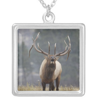 Bull Elk bugling, Yellowstone NP, Wyoming 2 Square Pendant Necklace