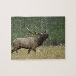 Bull Elk bugling, Yellowstone NP, Wyoming Jigsaw Puzzle