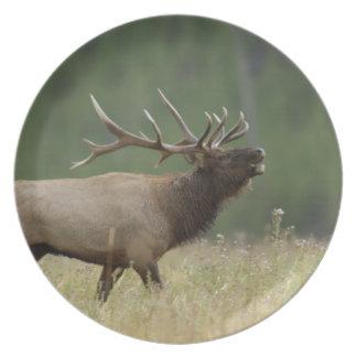 Bull Elk bugling, Yellowstone NP, Wyoming Melamine Plate