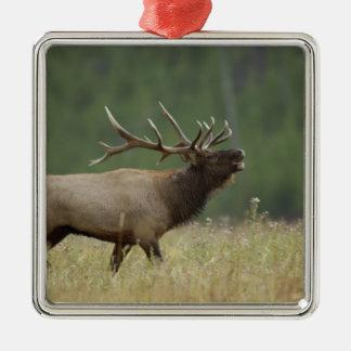 Bull Elk bugling, Yellowstone NP, Wyoming Square Metal Christmas Ornament