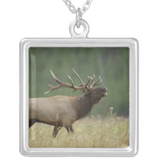 Bull Elk bugling, Yellowstone NP, Wyoming Silver Plated Necklace