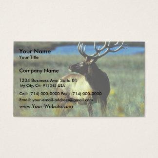Bull elk business card