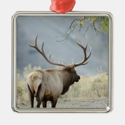 Bull Elk, Cervus canadensis, in the Metal Ornament