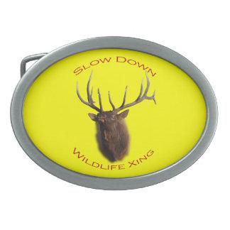 bull elk charging belt buckle