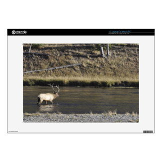 """Bull Elk Crossing Madison River, Yellowstone 2 Decals For 15"""" Laptops"""